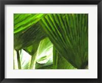 Framed Painted Ferns I