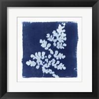 Framed Flora Cyanotype I