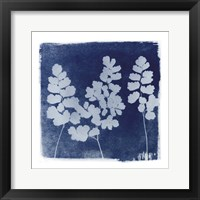 Framed Flora Cyanotype II