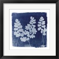 Flora Cyanotype II Framed Print