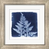 Framed Flora Cyanotype II