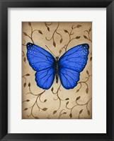 Framed Blue Butterfly