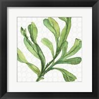 Framed Mixed Greens XIX