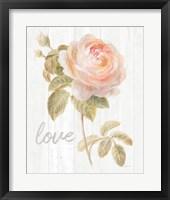 Framed Garden Rose on Wood Love