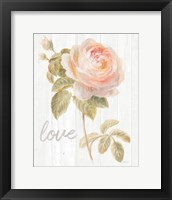 Framed Garden Rose on Wood Love