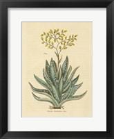 Framed Herbal Botanical XXXI
