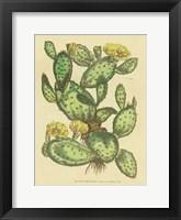 Framed Herbal Botanical XXIX
