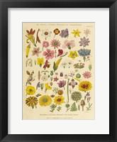 Framed Herbal Botanical XI