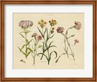 Framed Herbal Botanical VIII