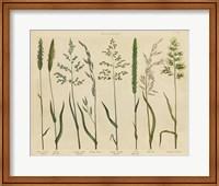 Framed Herbal Botanical VII