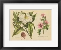 Framed Herbal Botanical II