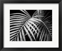 Framed Palm Fronds