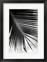Framed Palm Frond II