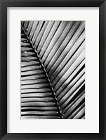 Framed Palm Frond I