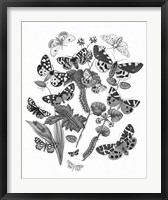Framed Butterfly Bouquet IV Linen BW IV