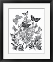 Framed Butterfly Bouquet II Linen BW II
