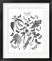 Framed Butterfly Bouquet III Linen BW III