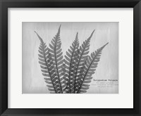 Framed Vintage Fern 2
