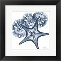 Framed Indigo Starfish and Sand Dollar