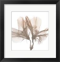 Framed Dry Azalea 1