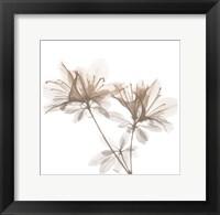 Framed Dry Azalea 2