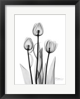 Framed Tulips Black & White