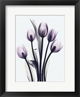Framed Essentially Tulips