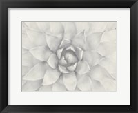 Framed Esaturated Succulant 1