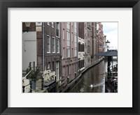 Framed Swan Amsterdam