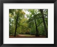 Framed Wood 5