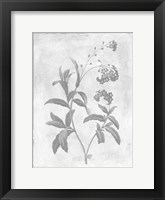Framed Monochrome Floral Cleaner 2