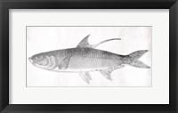 Framed Grey Fish