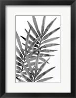 Framed Ferns By Night 1