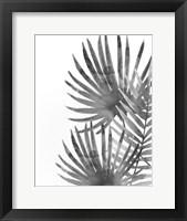 Framed Ferns By Night 2