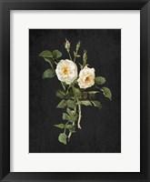 Framed Roses on Black 1