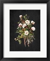 Framed Roses on Black 2
