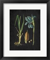 Framed Blue Iris 1
