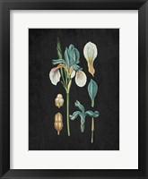 Framed Blue Iris 2
