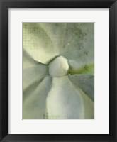 Framed Agave 2