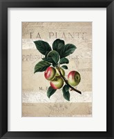 Framed Fruit 1