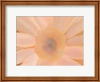 Framed Soft Glow