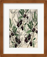 Framed Olive Branches