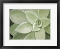 Framed Soft Agave