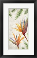 Framed Tropical Blooms 2
