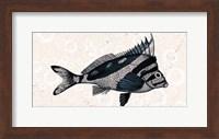 Framed Sea Life 2
