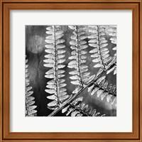 Framed Silver Fern 1