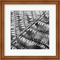 Framed Silver Fern 3