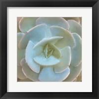 Framed Succulent 1
