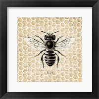 Framed Honeycomb No 24