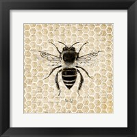 Framed Honeycomb No 32